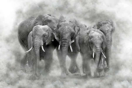 Elephant  in smoke. National park of Kenya, Africa Stock Photo
