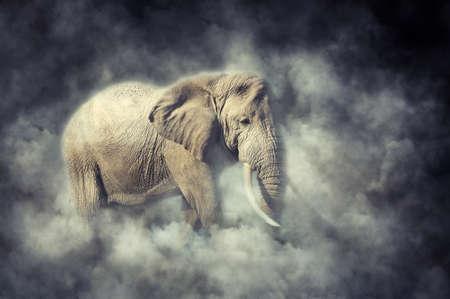Elephant in National park of Kenya, Africa. Elephant in smoke Stock Photo