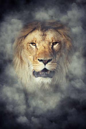 Schließen männlicher Löwe in Rauch auf dunklem Hintergrund Standard-Bild - 64459560