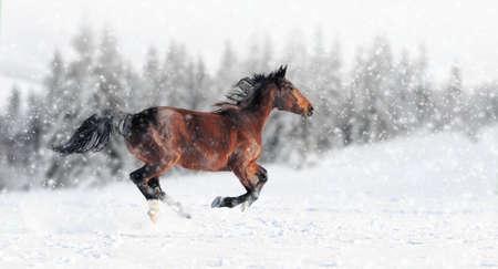 馬は冬のフィールドでギャロップを実行します。