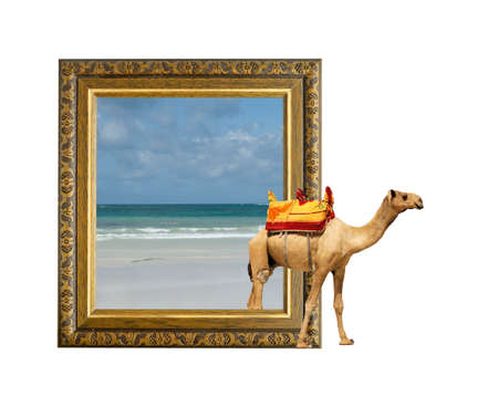 Camel in old wooden frame with 3d effect