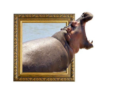 Hippo in old wooden frame with 3d effect Stock Photo