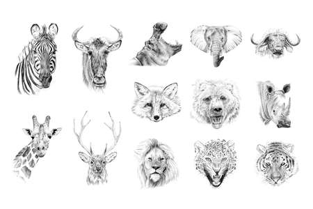 Portrait of animals drawn by hand in pencil. Originals, no tracing