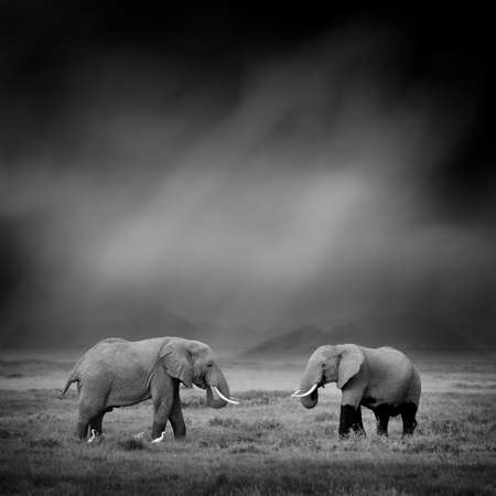 Dramatic black and white image of a elephant on black background