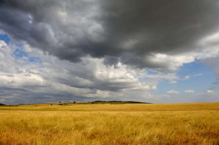 Savannah landscape in the National park in Kenya, Africa Stock Photo
