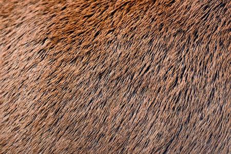 deer spot: Close young deer abstract background fur texture