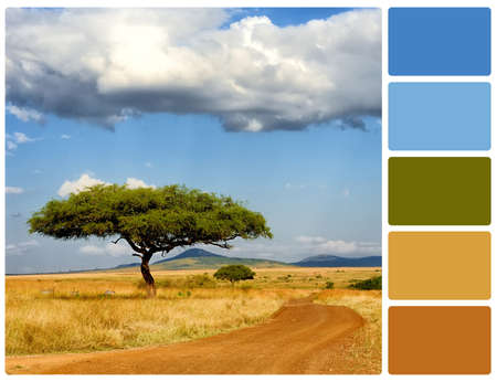 Landscape with tree. Colour palette with complimentary colour swatches