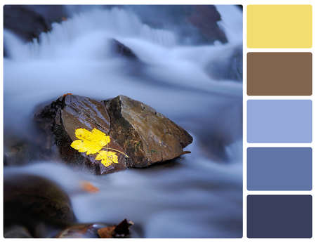 Yellow leaf on stone in river. Colour palette with complimentary colour swatches