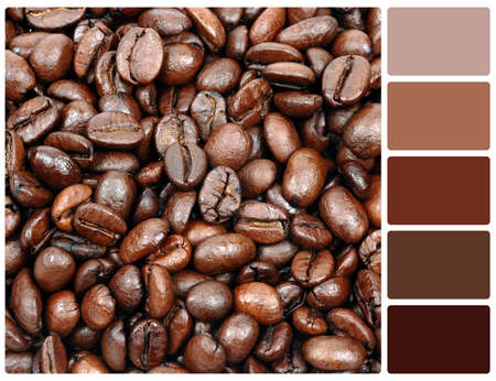 Coffee grain texture. Colour palette with complimentary colour swatches