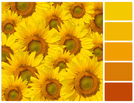 Sunflowers. Colour palette with complimentary colour swatches