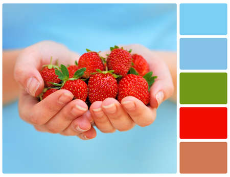 Hands holding fresh strawberries. Colour palette with complimentary colour swatches