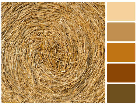 Straw texture background. Colour palette with complimentary colour swatches