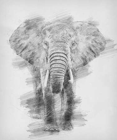 Elephant. Black and white sketch with pencil