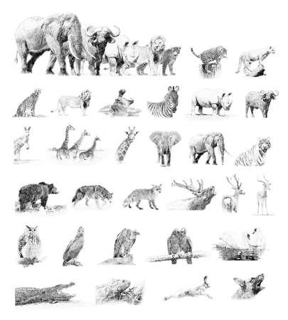 Collectie dieren. Zwart en wit schets met potlood
