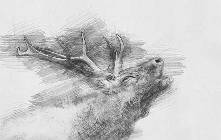 Herten. Zwart-witte schets met potlood