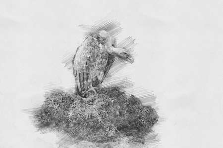 Vulture. Black and white sketch with pencil