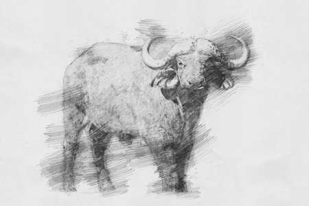 Buffalo. Black and white sketch with pencil Stock Photo