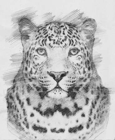 danger: Leopard. Black and white sketch with pencil Stock Photo