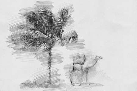 sand dunes: Camel and palm. Black and white sketch with pencil