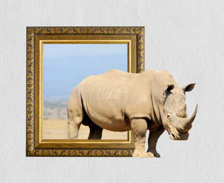 Rhino in old wooden frame with 3d effect Imagens