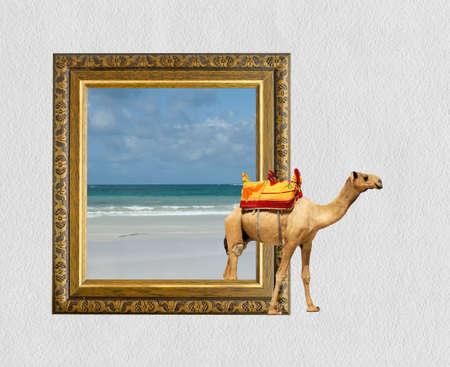 ornamentations: Camel in old wooden frame with 3d effect