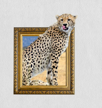 ornamentations: Cheetah in old wooden frame with 3d effect