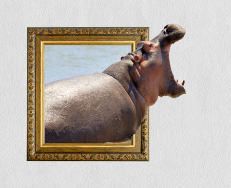 Hippo in old wooden frame with 3d effect Imagens