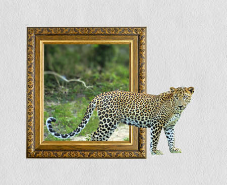 Leopard in old wooden frame with 3d effect Imagens