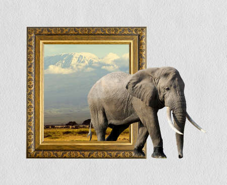 ornamentations: Elephant in old wooden frame with 3d effect