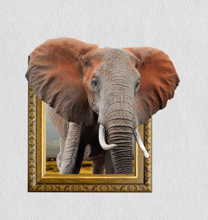Elephant in old wooden frame with 3d effect Imagens - 83433717
