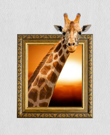 Giraffe in old wooden frame with 3d effect