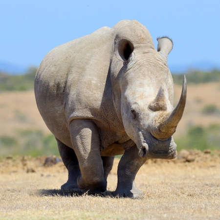 아프리카 백색 코뿔소, 케냐의 국립 공원
