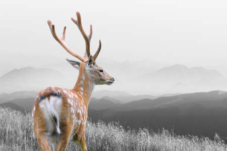 Portrait of majestic powerful adult red deer stag in the natural environment. Black and white photography with color deer