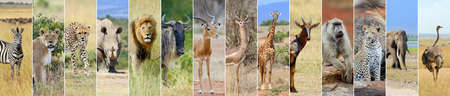 Collage of 14 african wildlife animal