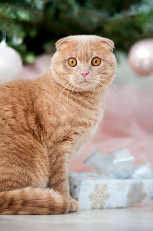 eye ball: Cat sitting with gifts near Christmas tree with ball Stock Photo