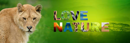 Banner with lion and text Love Nature with texture