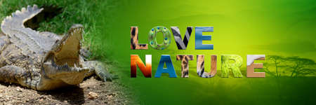 Banner with crocodile and text Love Nature with texture