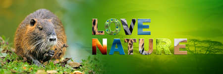 Banner with muskrat and text Love Nature with texture