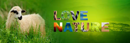 Banner with sheep and text Love Nature with texture