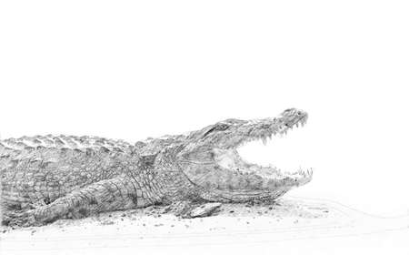 Crocodile. Black and white sketch with pencil