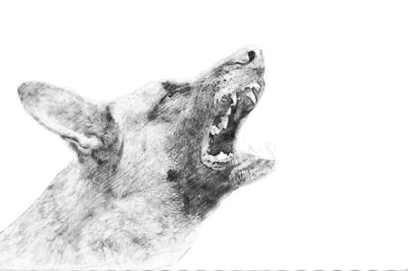 Angry dog. Black and white sketch with pencil
