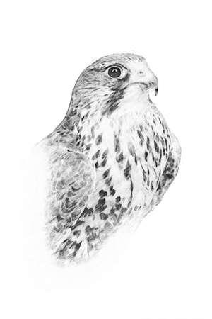 Adler. Schwarz-Weiß-Skizze mit Bleistift Standard-Bild
