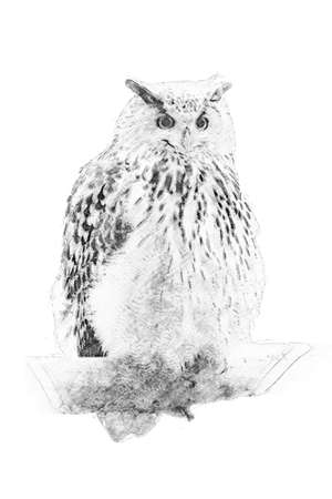 Owl. Black and white sketch with pencil