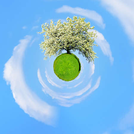 360 degree view of Single blossoming tree in spring on rural meadow Stock Photo