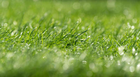 Close fresh green grass with water drops