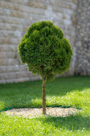 Landscaping in the garden with tree