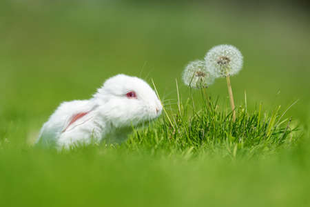 Little white rabbit on green grass in summer day