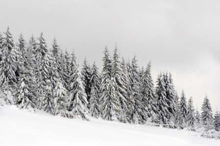 Winter landscape with many snow covered trees