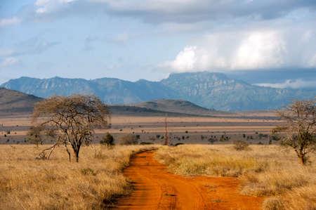 Savannah landscape in the National park of Kenya, Africa