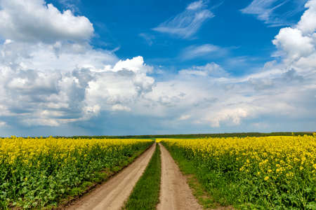 Field of rapeseed with rural road and beautiful cloud. Plant for green energy and industry